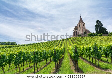 Hunawihr with vineyards, Alsace, France Stock photo © phbcz