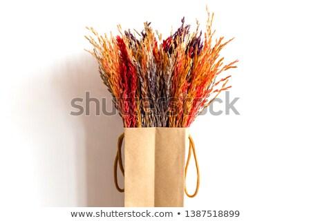 secar · dourado · secas · fundo · trigo · plantas - foto stock © farres