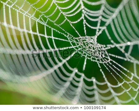 Dewy Spiders Web Stock photo © dgilder