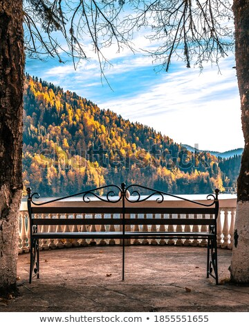 Beautiful colorful forest, and benches. Stock photo © justinb