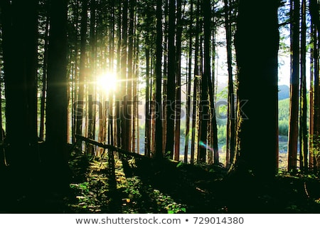 Retrato tiro cara madera feliz Foto stock © mtoome