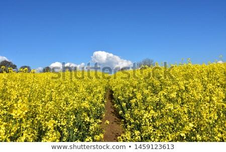 út mező füves tájkép Stock fotó © njnightsky