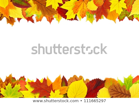 Maple Leaves Mixed Fall Colors Border 2 Stock photo © davidgn