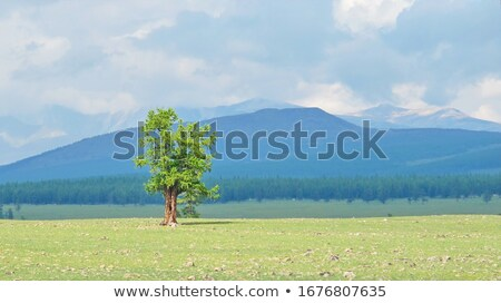 lonely tree in mountains mongolia stock photo © iserg