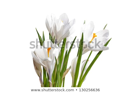 Tiny White Flower Bouquet Macro Stock photo © Kuzeytac