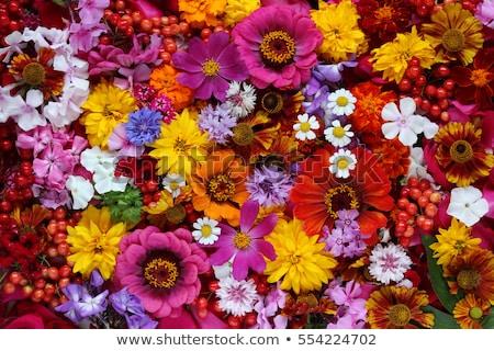 различный цветы цветок весны сердце дизайна Сток-фото © haiderazim