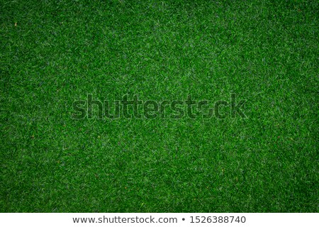 abstract golf green background Stock photo © prill