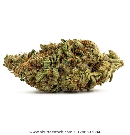 cannabis · levél · izolált · fehér · fű · természet - stock fotó © eldadcarin