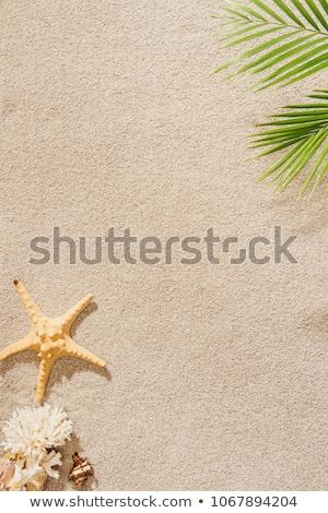Levél homokos tengerpart tengerpart természet terv kert Stock fotó © meinzahn