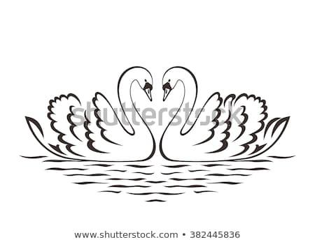 美しい · 白 · ユリ · 花 · 池 · 表面 - ストックフォト © marisha
