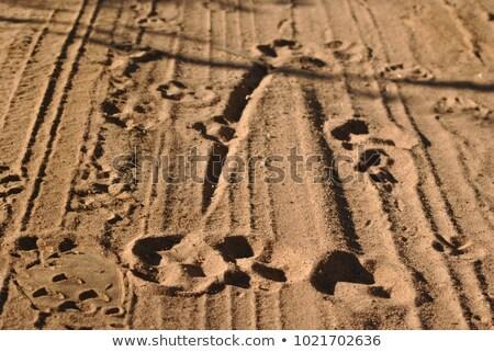 cão · pata · areia · conjunto · três · praia - foto stock © stocksnapper
