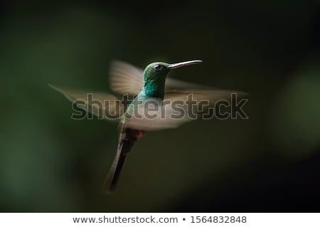 небольшой · hummingbird · цветы · заморожены · действий · цветок - Сток-фото © snyfer