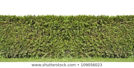 Rurale recinzione evergreen impianti cielo Foto d'archivio © vavlt