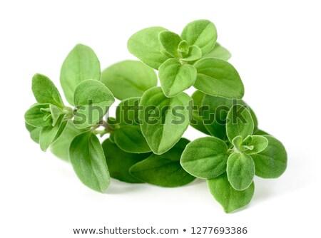 Sweet Marjoram plant Stock photo © italianestro