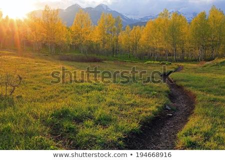 Path through the meadow Stock photo © hraska
