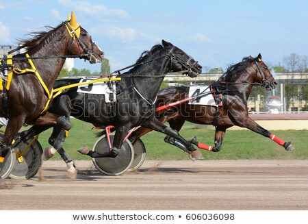 horses in harness Stock photo © hraska