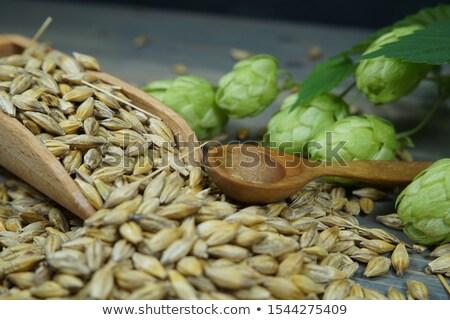 Fraîches bière laisse hop isolé blanche Photo stock © brulove