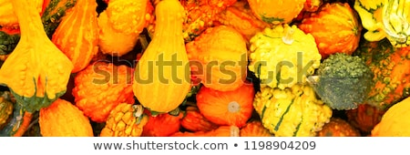 Panoramic Scene Farm Field Pumpkin Patch Vegetables Ripe Harvest Stock photo © cboswell