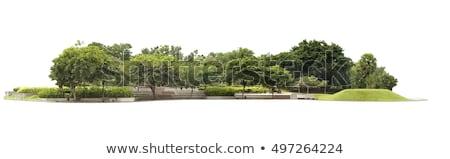 Najaar boom geïsoleerd witte decoratief hout Stockfoto © tashatuvango