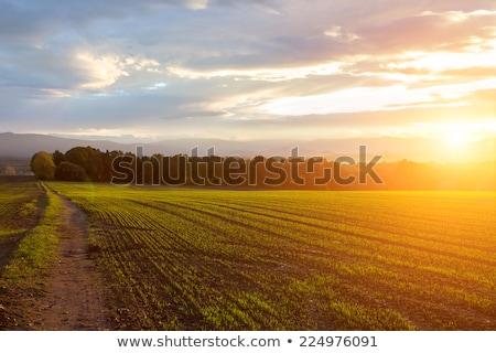 Gün batımı çiftlik alan gökyüzü bahar ışık Stok fotoğraf © alex_grichenko