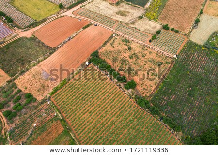 Maltese countryside stock photo © dinozzaver