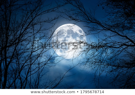 holdfény · fák · éjszaka · fa · sziluett · ötlet - stock fotó © gemenacom
