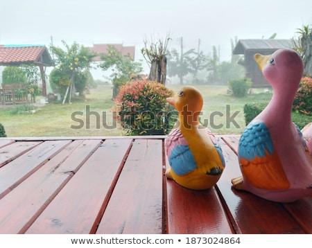 háziasított · fehér · kacsa - stock fotó © taviphoto