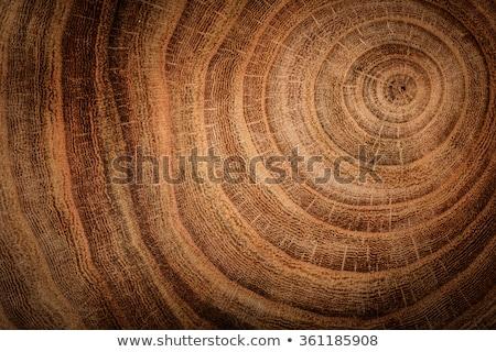 Foto stock: Anéis · madeira · foto · detalhes · céu