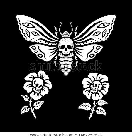 skull moth Stock photo © lineartestpilot