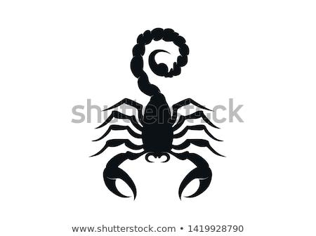 Scorpion Silhouettes Stock photo © derocz