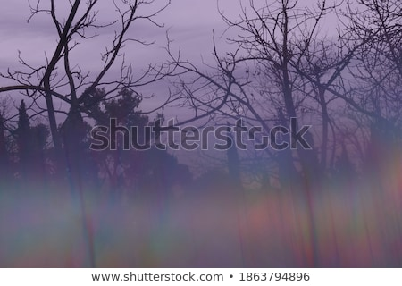 prism trees abstract landscape Stock photo © sirylok