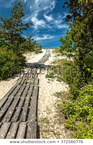 wooden trail through pine forest stock photo © viperfzk