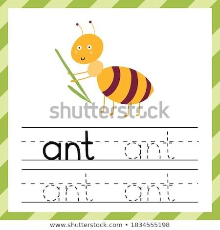 Woord insecten illustratie natuur tuin achtergrond Stockfoto © bluering