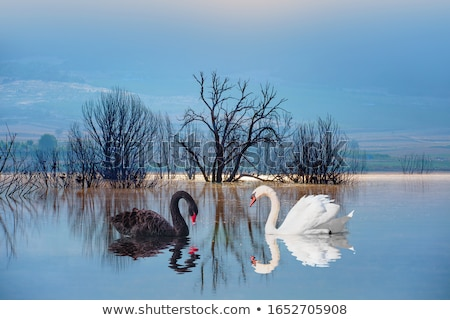 Blanco estanque agua casa ciudad iglesia Foto stock © artjazz