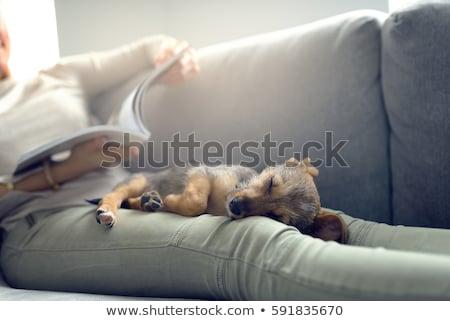 Woman laying on sofa reading magazine. Stock photo © IS2