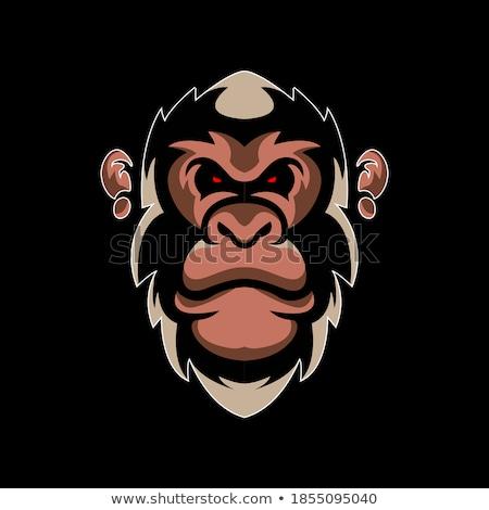 Rajz mérges röplabda játékos csimpánz néz Stock fotó © cthoman