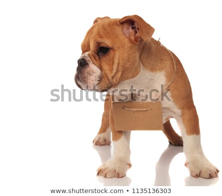 happy english bulldog with empty billboard around neck standing Stock photo © feedough