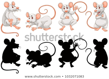 White rats in four actions Stock photo © colematt