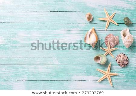 frontière · cadre · été · plage · shell · starfish - photo stock © neirfy
