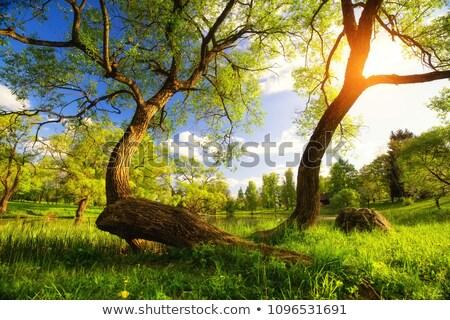 prado · completo · dandelion · cênico · quadro · leão - foto stock © jamdesign