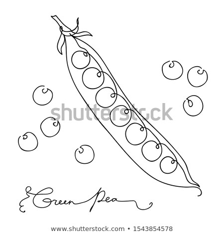 Hand drawn sketch green peas. isolated on white background. Continuous line art. Outline style hand  Stock photo © ESSL