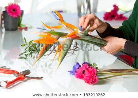 Preparing flower for arranging bouquet Stock photo © pressmaster