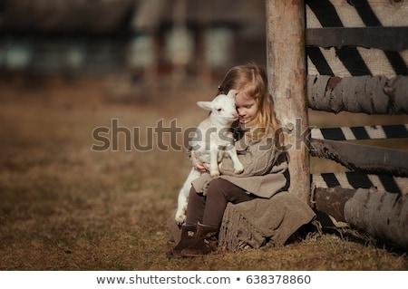 Lány játék bárány farm természet gyermek Stock fotó © galitskaya