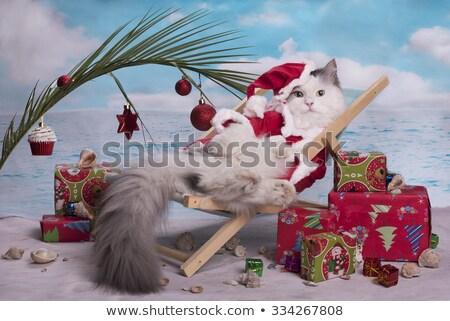 Christmas kat pak contact groene Rood Stockfoto © CatchyImages