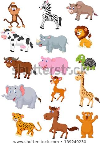 African buffalo cartoon animal character Stock photo © izakowski