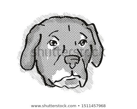 Afador or Afghan Lab Dog Breed Cartoon Retro Drawing Stock photo © patrimonio