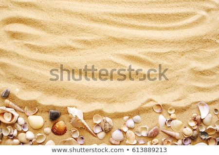 macro shot of shell at sand beach stock photo © vapi
