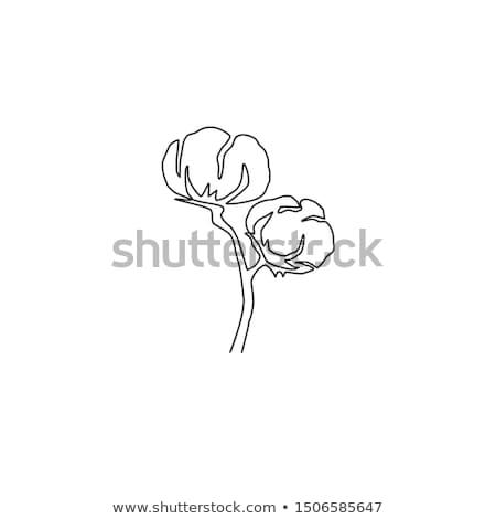 Coton fleur icône ligne art dessin Photo stock © ESSL