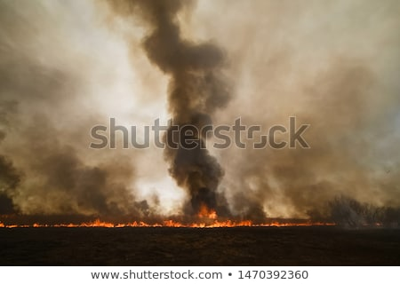 Grass trees in a burnt landscape Stock photo © lovleah