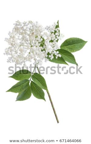 Stock photo: Elder flower lemonade